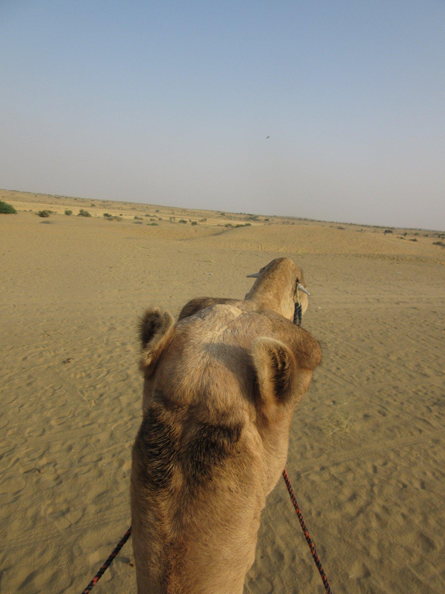 Voilà à quoi ça ressemble de monter un chameau